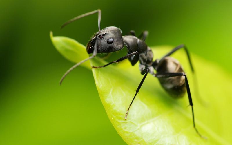 Cómo eliminar hormigas de tu huerta o jardín