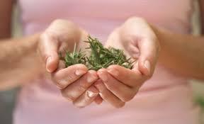 Como eliminar desordenes menstruales con hierbas