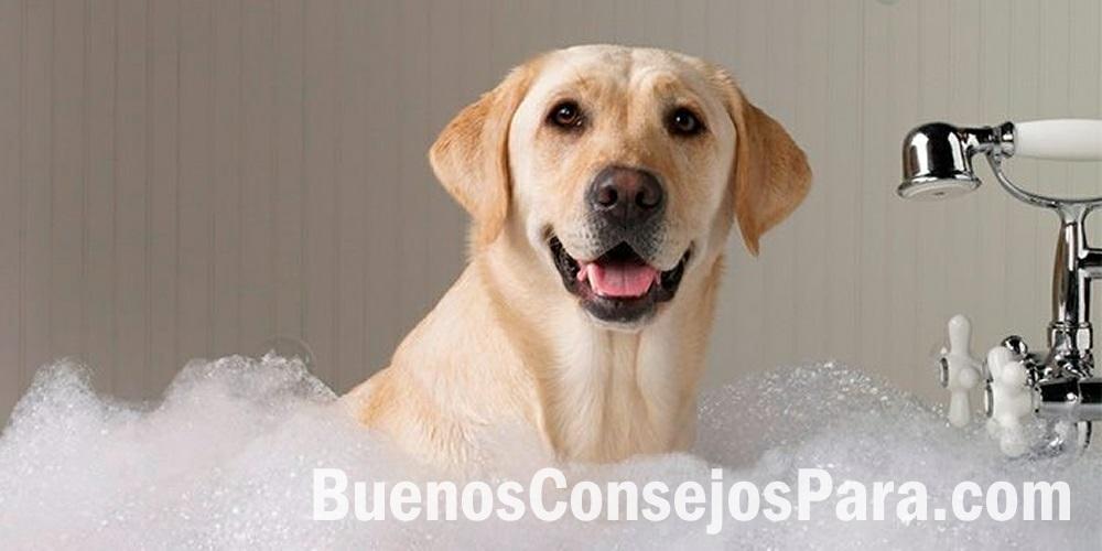 consejos cuidar perro